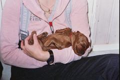 Pikku Iiris rakasti syliä jo ihan vauvana