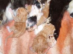 Tallille syntyi ihania pieniä kissan pentuja