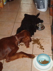 Ella ja Tessu syömä puuhissa