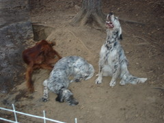 Ella, Elvi ja Misty-kaveri