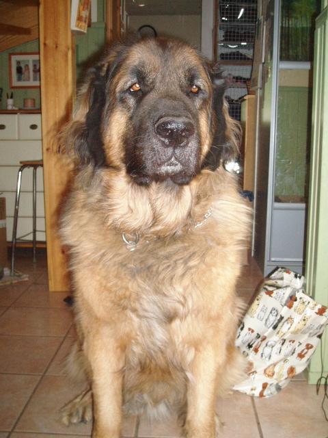 """suppusuinen koiranpentu"" Sulo (Maxigor Moscowitz)"