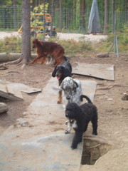 Tassu-irkku omien koiriemme joukossa
