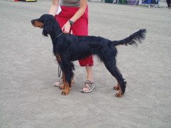 Mäntyharjulla 13.8.2006