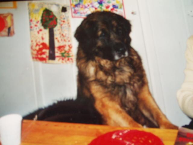 Junnu (Kinglords´Mr Roxibion 24.3.1994-11.4.2001)