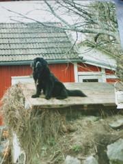 Senni (Pideraqs Coca Cola 4.10.1993-30.9.2003)