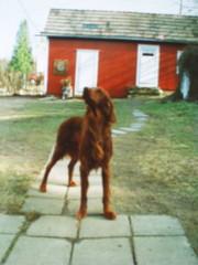 Valtsu (Murtosuon Valtsu 18.9.1989-4.12.1993)
