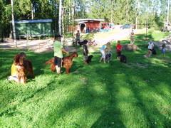Lapsi ja koira kilpailun osallistujat
