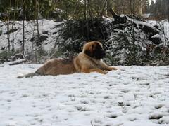 talvi tunnelmaa 047