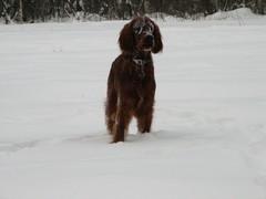 winterday 02-2009 095