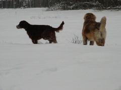 winterday 02-2009 087
