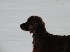 winterday 02-2009 127