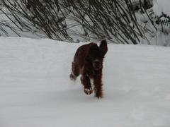 winterday 02-2009 131