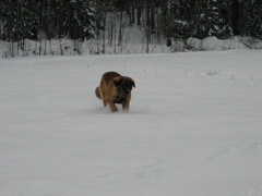 winterday 02-2009 123
