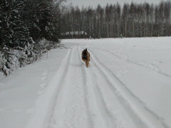 winterday 02-2009 151