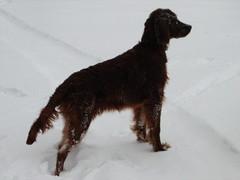 winterday 02-2009 159