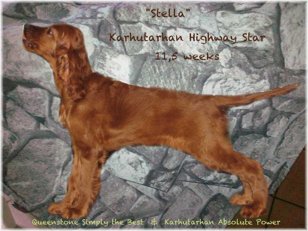 stella115.jpg