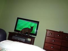 didier katsoo jalkapalloa