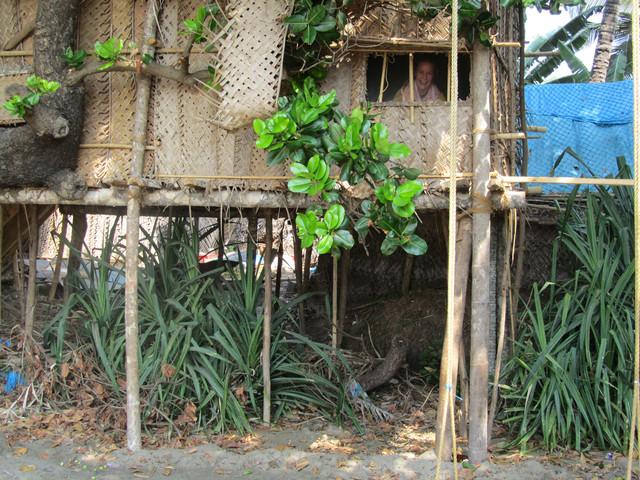 Mari puussa.  Mari in the tree.   Kudli Beach, Gokarna 28.1.