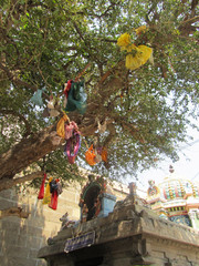 Toivomuspuu.  A tree for wishes. Tiruvannaamalai 1.3.  Kuva S.P.