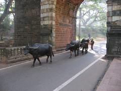 Old Goa ,19.1.  Kuva S.P.