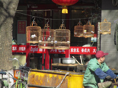 Ravintola tuulettaa ruoka-aineita.  The restaurant airs foodstuff.   Peking 14.3.
