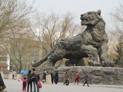 Kaikki on suurta..., Pekingin eläintarha.  Everything is so big....Beijing Zoo.   15.3.