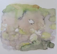 lummelampi, näckrosadam, 34x32 cm