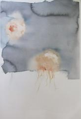 meduusoja, maneter, 36x53 cm