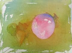 Kuuluisa sipuli, Lucca, 32 x 23 cm (lev x kork)