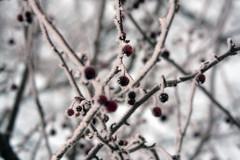 talvenvaripilkku1