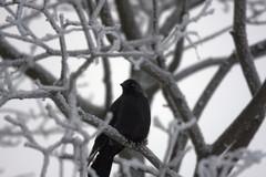 talvenvaripilkku4
