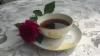 kaffekutsu