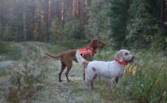 Kerttu ja Eamon 16.9.2018 (kuva Miia Mäkijouppila)