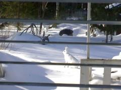 3 jänistä terassilla