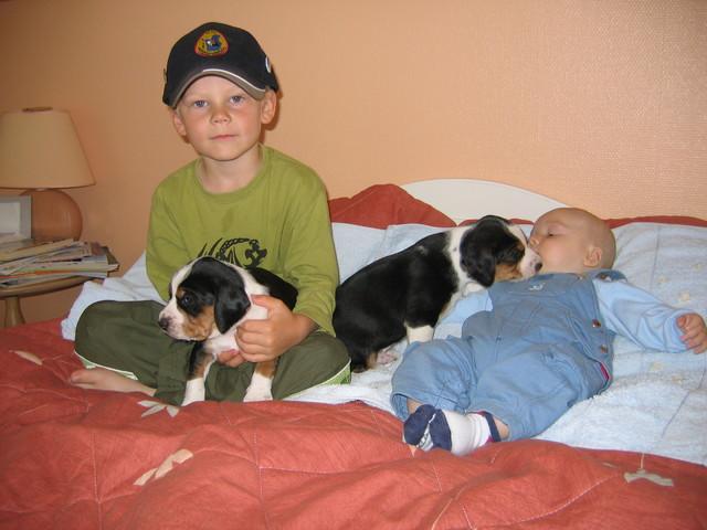 tulevia koiramiehiä ?