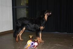 biloxian alegasina 07.12.2008