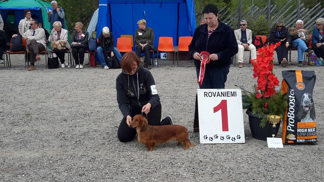 FCI group IV - Winners of the International Dog Show «Juhannus 2015» (Finland), 20-21 June 2015