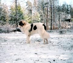 japstiffin berro talvi 2000