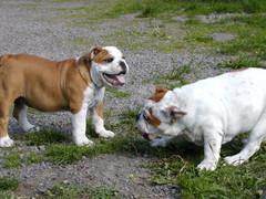 barbo ja belissa koiram�ell� 18.6.2008