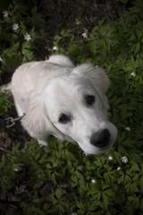 Koira kukkasilla