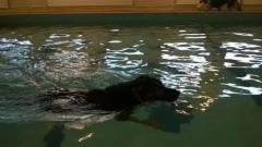 Kuksi uimassa