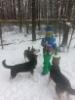 Casper kouluttaa koiria