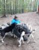 Sanna ja koirat