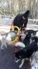 Mervi opettaa temppuja koirille maaliskuussa 2017