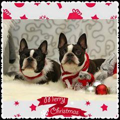joulu_pari