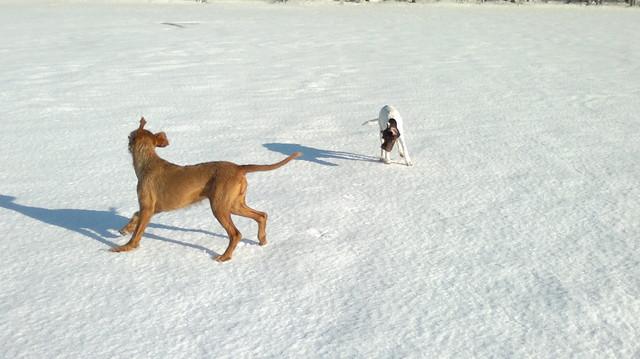 Lumi ja Friidu