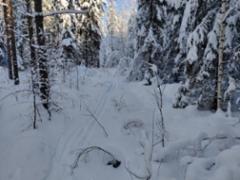 talvi_2021_2