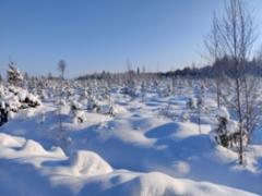 talvi_2021_4