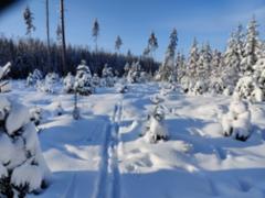 talvi2021_3