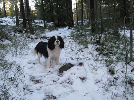 bobi talvi 2008
